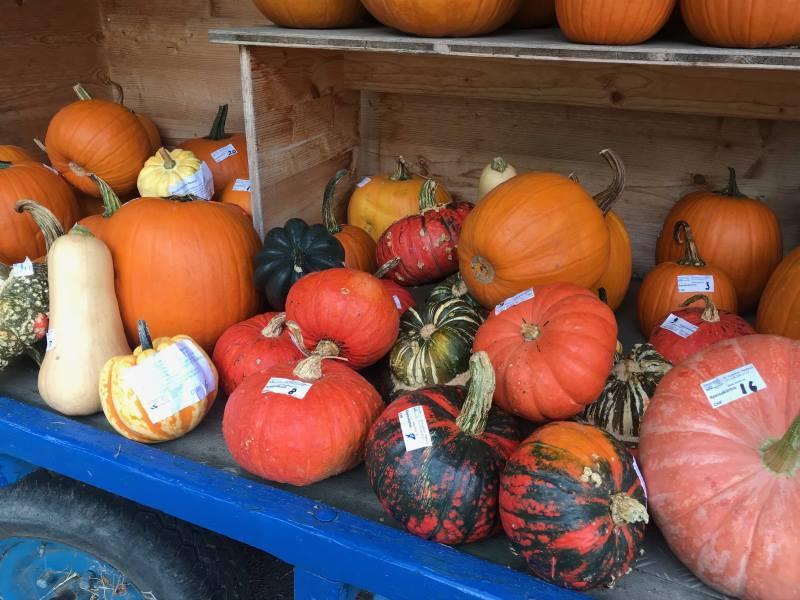 Erlebnisse und Rahmenprogramme im Herbst